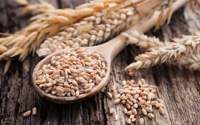 Gluten in der Ernährung – Gesund oder ungesund?